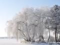 Winter foto.jpg
